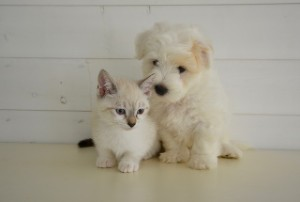 Picture of cute dog and cat.